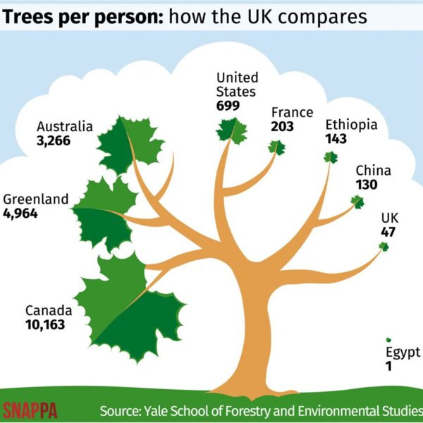 trees per person uk